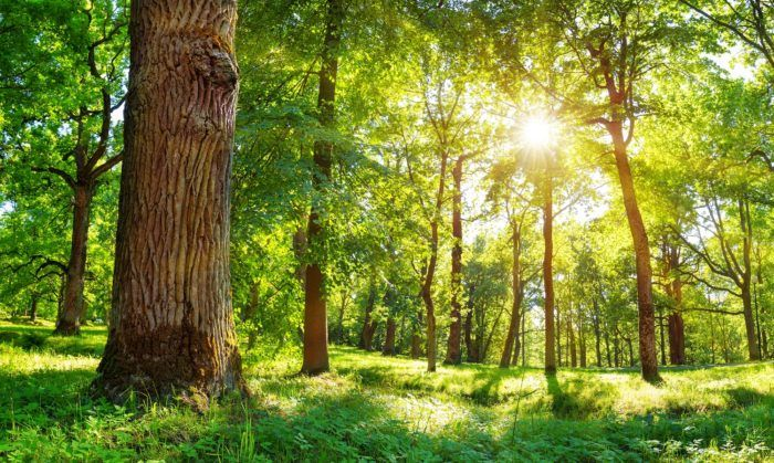Planned-Giving-and-Sustainable-ESG-Investing